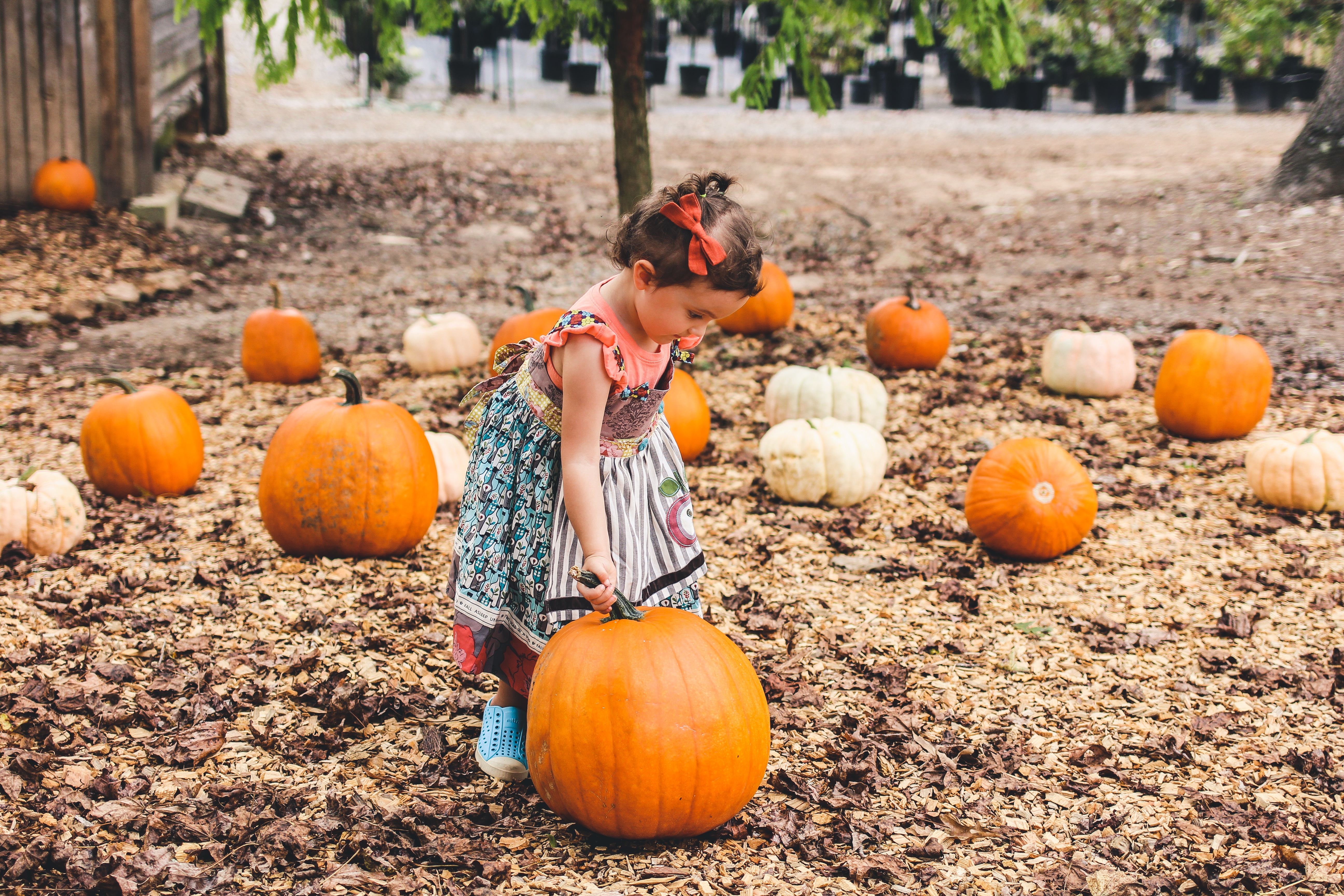 Educational Fall Activities To Do With Your Kids