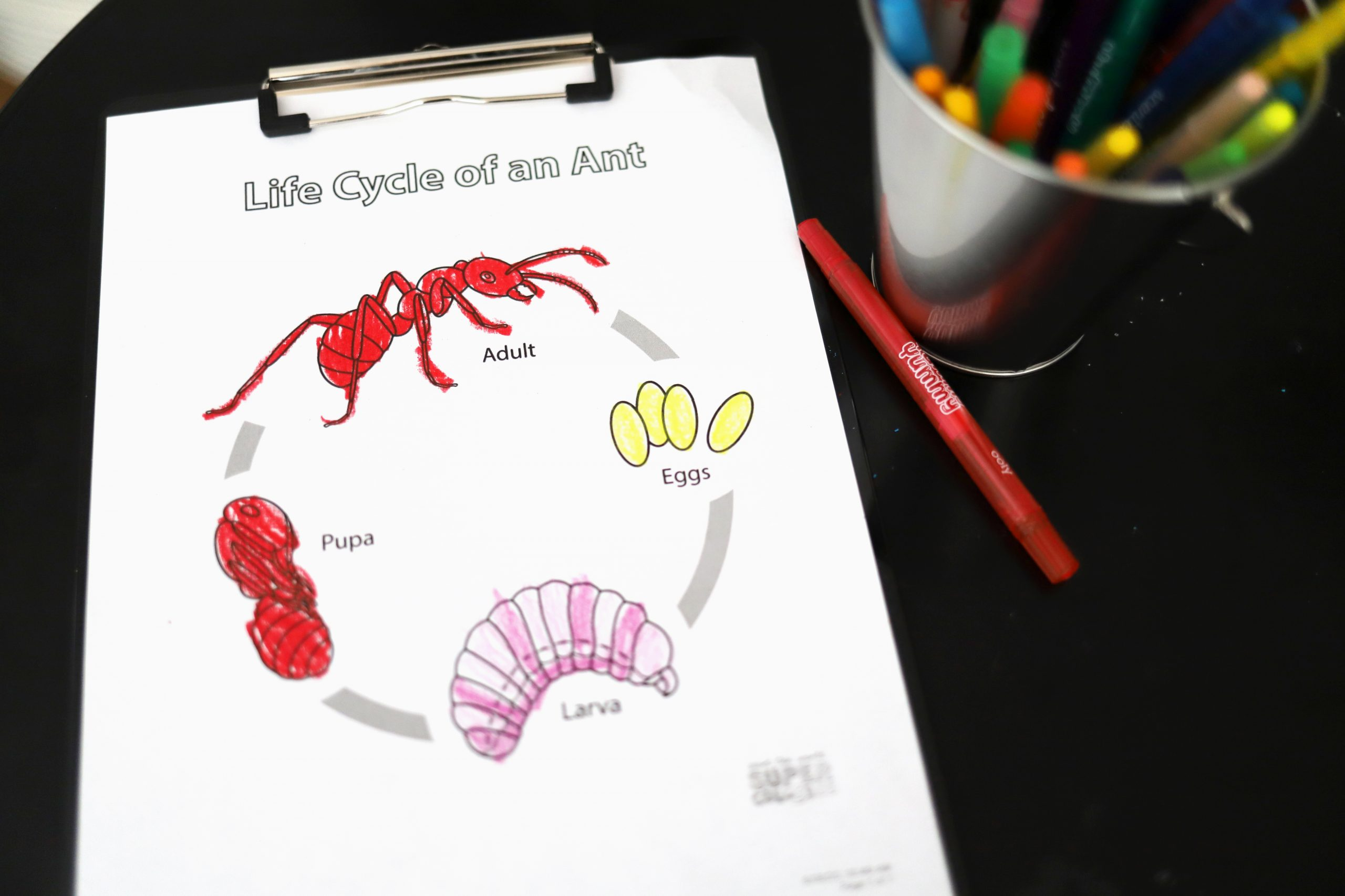 Insect Life Cycle Coloring Pages