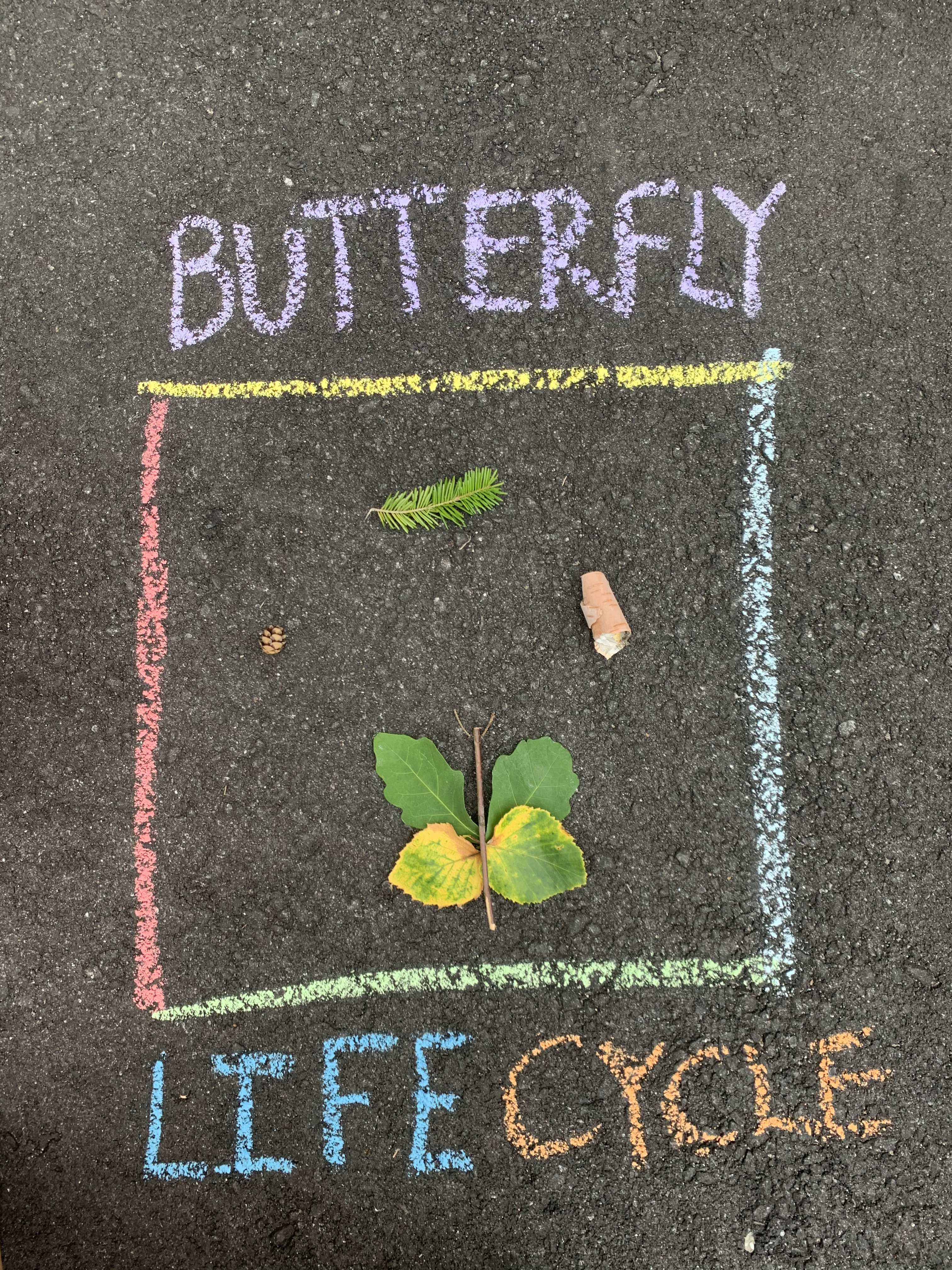 Outside Exploring & Insect Life Cycles Activity